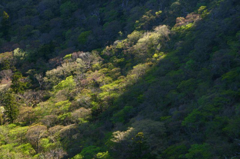 s-桜島霧島20080503 198
