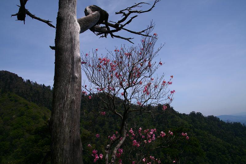s-傾山杉ケ越20080506 021