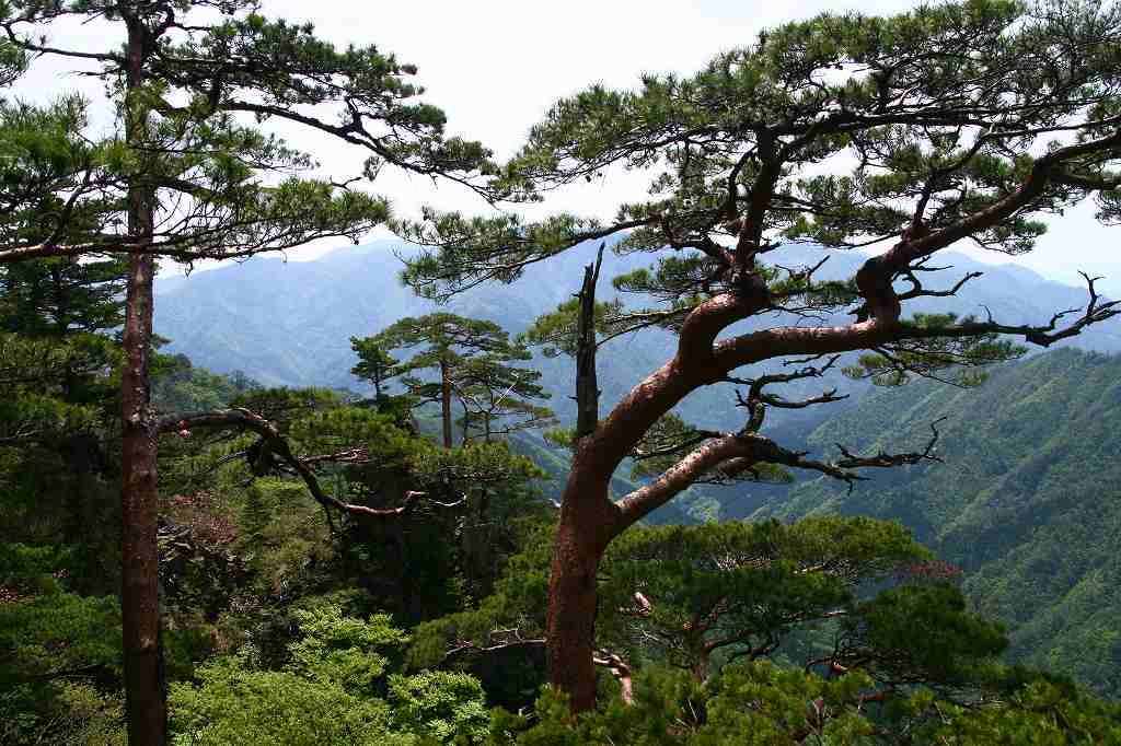 s-傾山杉ケ越20080506 038