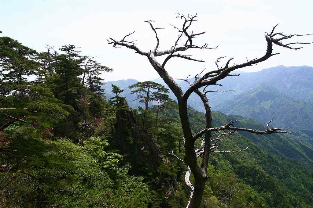 s-傾山杉ケ越20080506 045