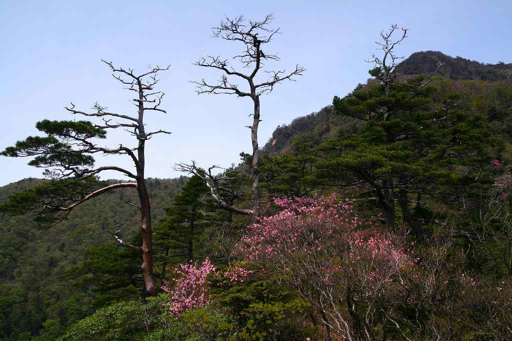 s-傾山杉ケ越20080506 061