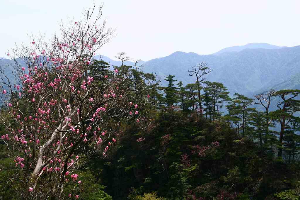 s-傾山杉ケ越20080506 075
