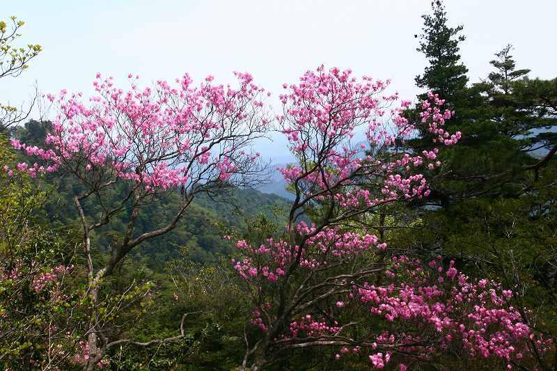 s-傾山杉ケ越20080506 091