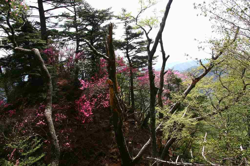 s-傾山杉ケ越20080506 109