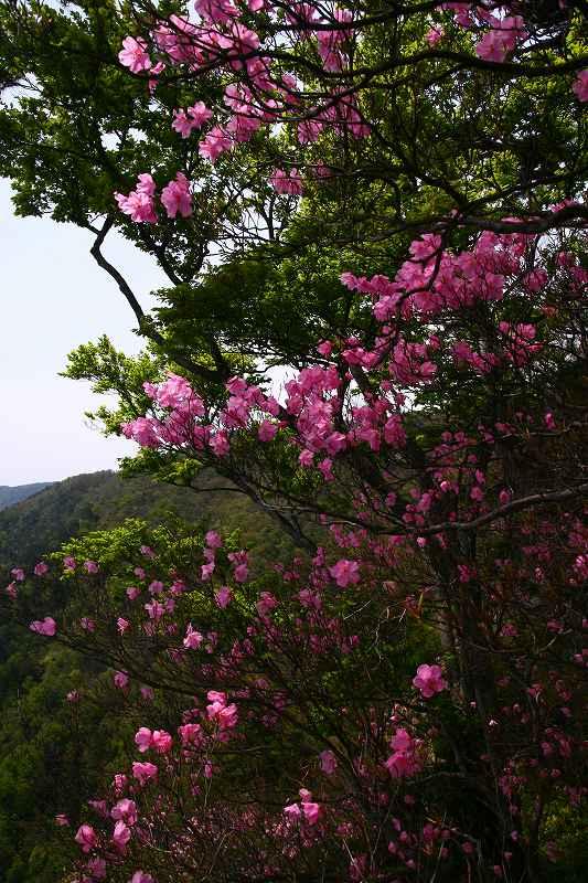 s-傾山杉ケ越20080506 111
