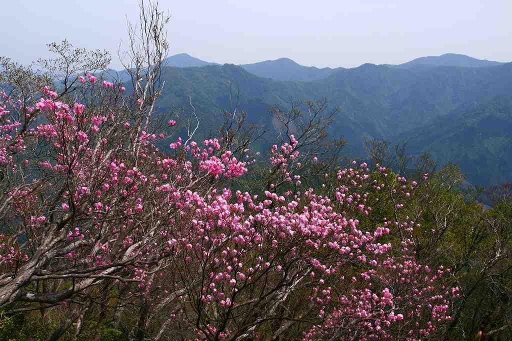 s-傾山杉ケ越20080506 131