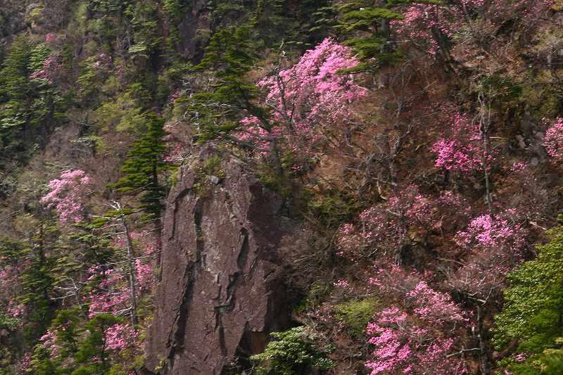 s-傾山杉ケ越20080506 149