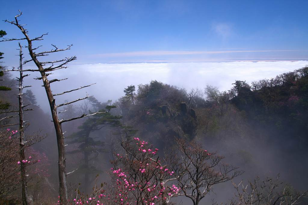 s-傾山黒仁田20080511 117