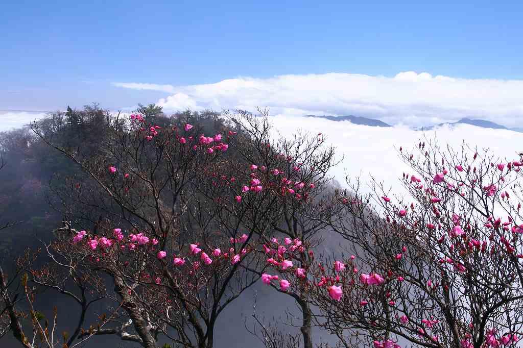 s-傾山黒仁田20080511 122