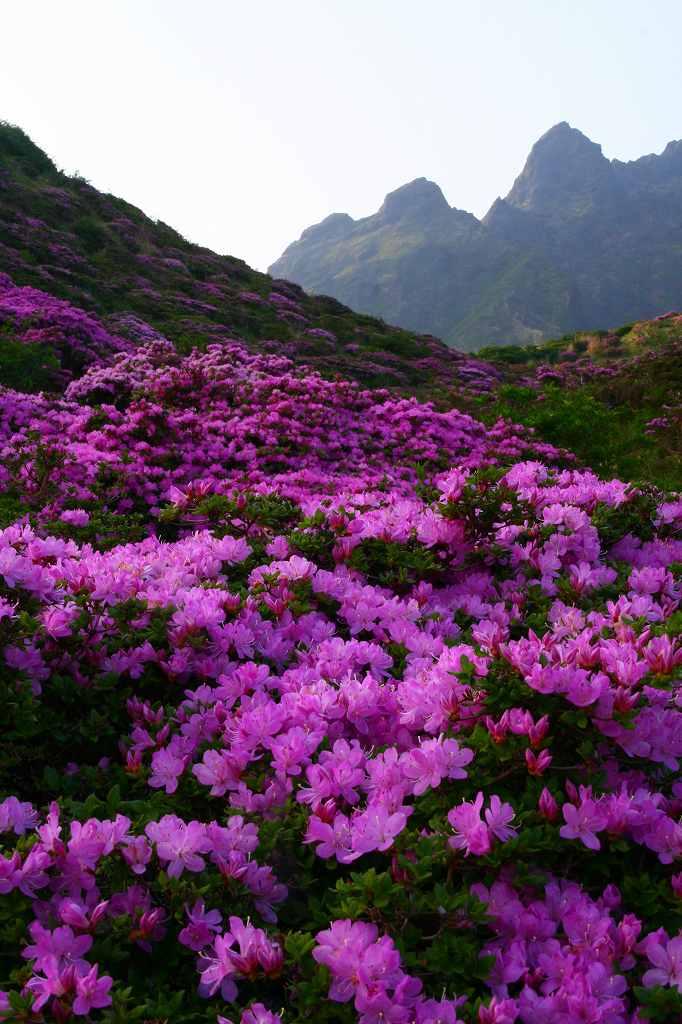 s-阿蘇仙酔狭山上20080517 095