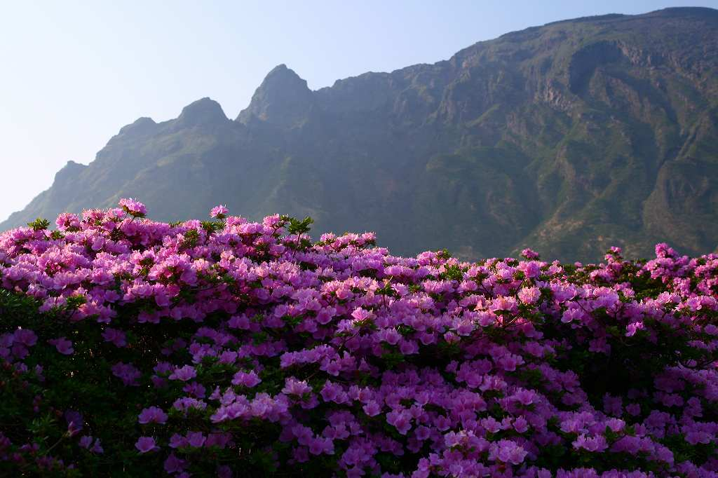 s-阿蘇仙酔狭山上20080517 112