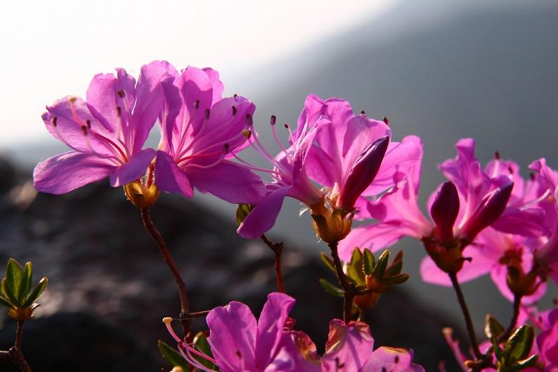 s-阿蘇仙酔狭山上20080517 123