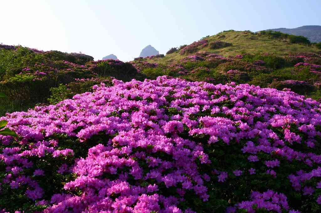 s-阿蘇仙酔狭山上20080517 132