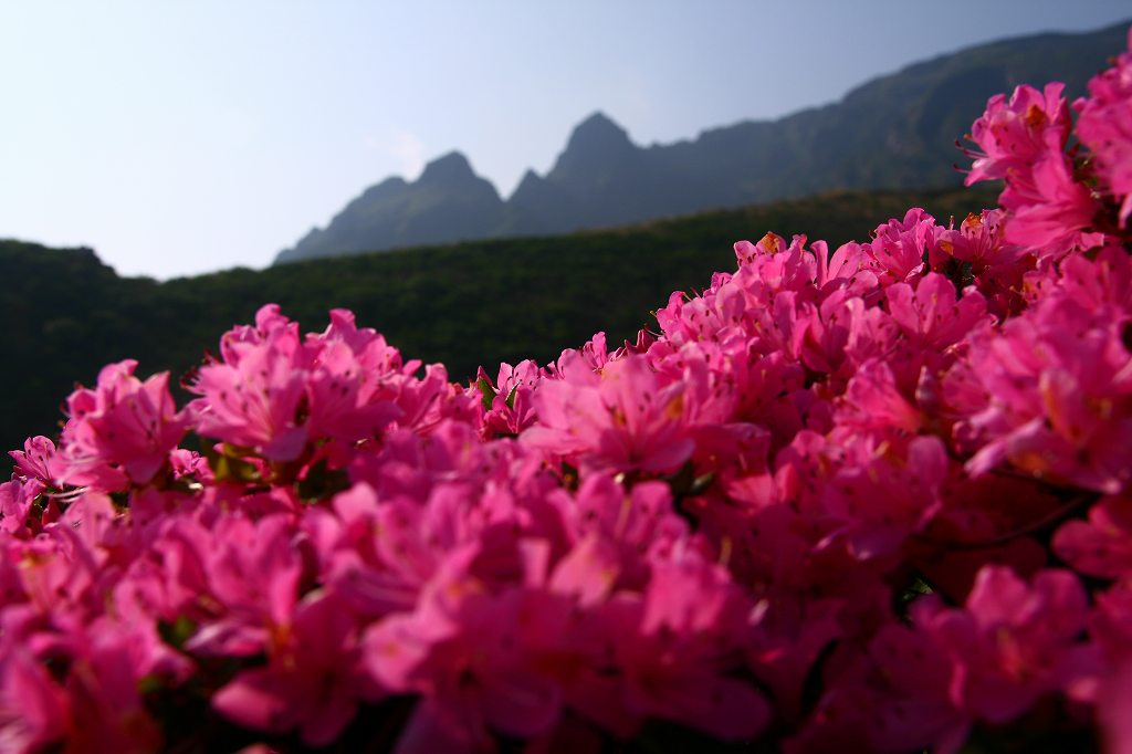 s-阿蘇仙酔狭山上20080517 162