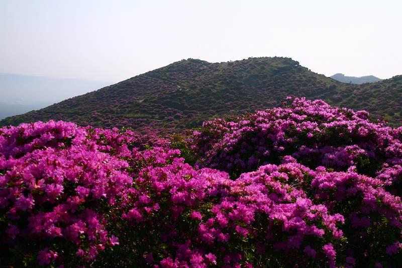 s-阿蘇仙酔狭山上20080517 198