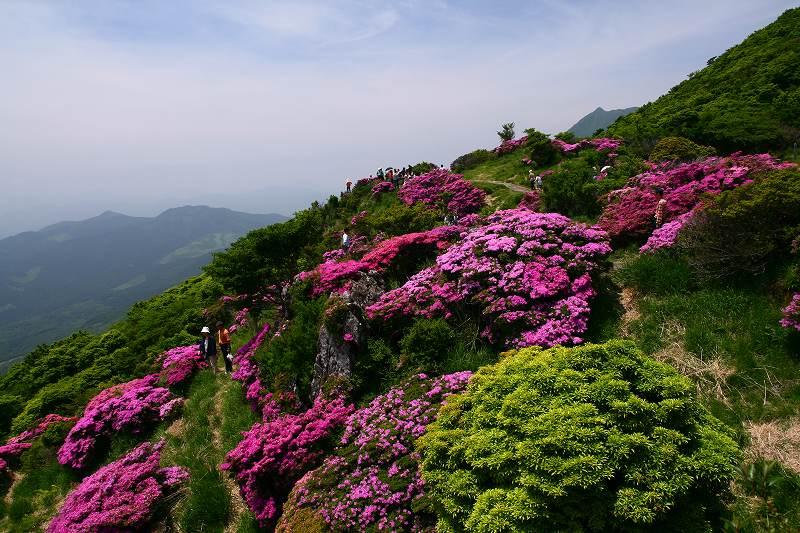 s-鶴見山20080601 146