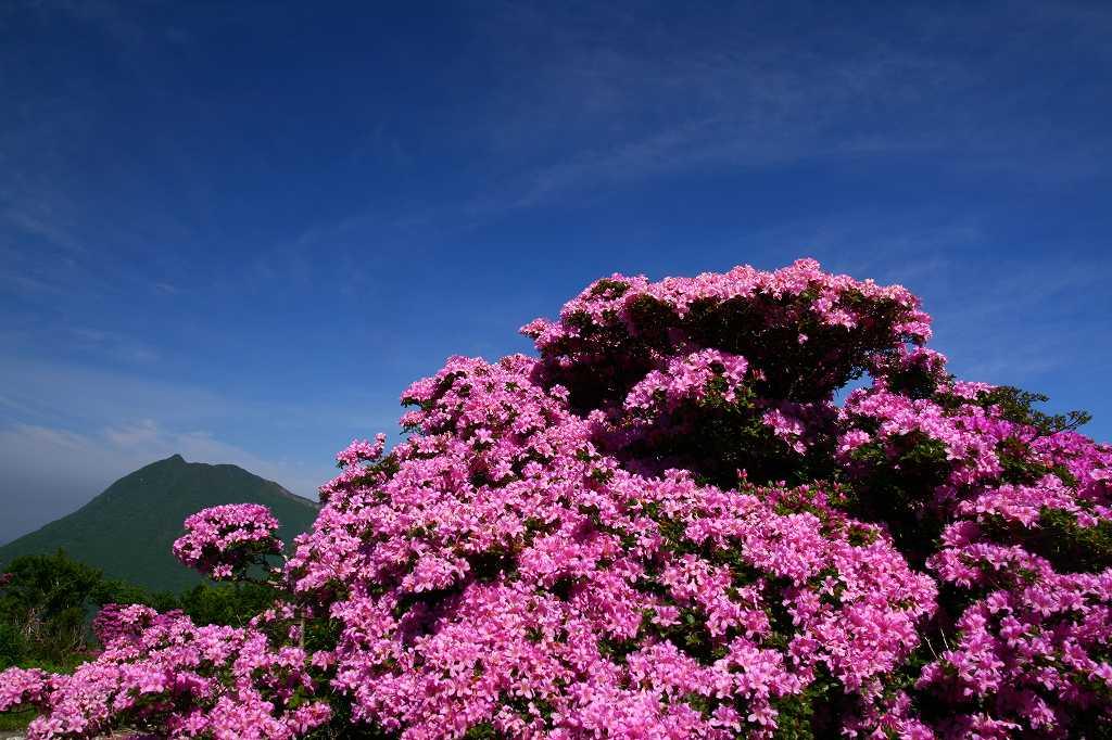 s-鶴見山20080601 034
