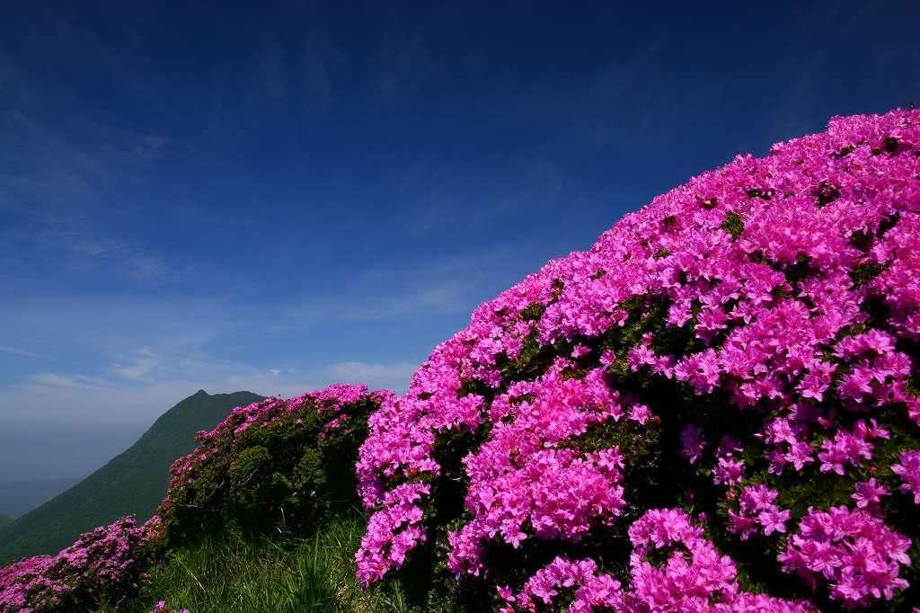 s-鶴見山20080601 050