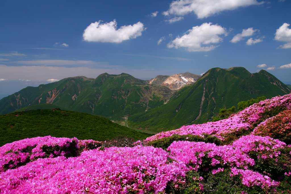 s-平治岳20080613 225