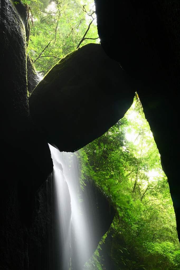 s-由布川峡谷椿20080809 019