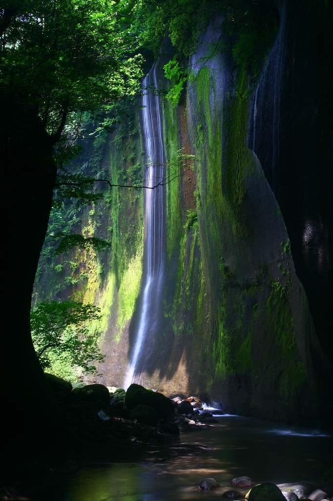 s-由布川峡谷椿20080802 178