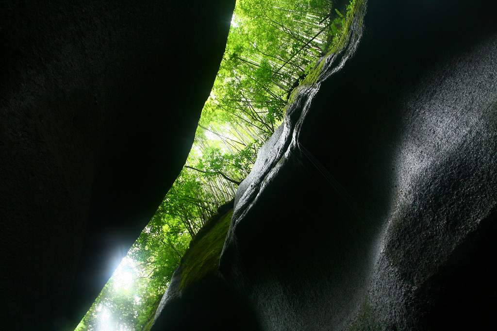 s-由布川峡谷椿20080813 086