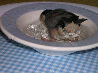 ポン水浴び