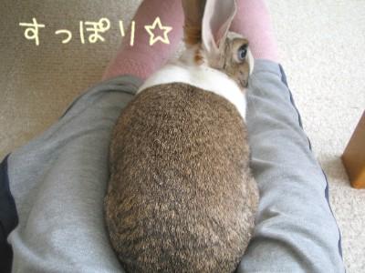 hikarusuppori.jpg