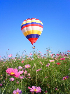 コスモスと気球
