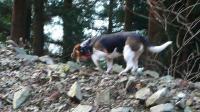 20091121-95犬越路35