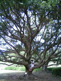 葉っぱの裏にコブがイッパイの木