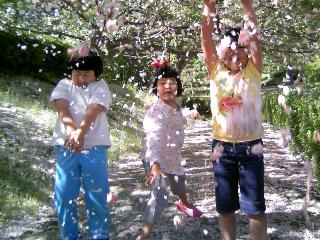 桜吹雪~♪