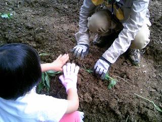 苗を植える②