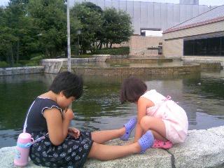 県美の池の鯉