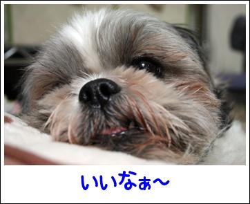 IMG_0008_1.jpg