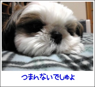 Image0391.jpg