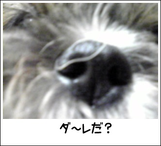 Image0401.jpg