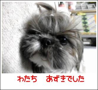 Image0421.jpg