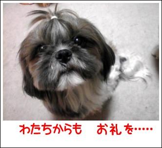 Image0501.jpg