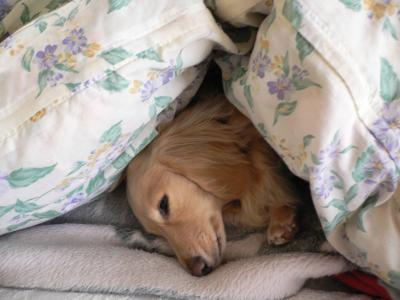 レン寝起き2