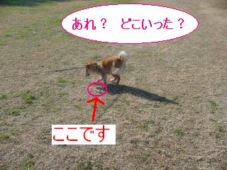 DSC04032.jpg
