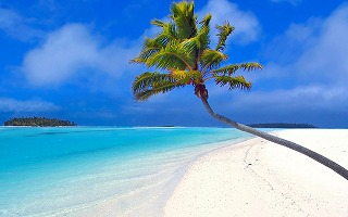 isolated-palm-tree-wallpapers_14247_1280x800.jpg