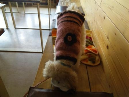 モコセーター
