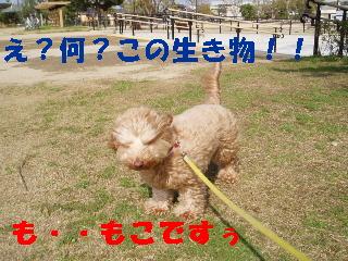 20060420223607.jpg