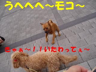20060527222415.jpg