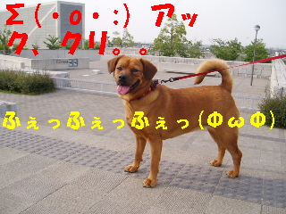 20060605212157.jpg