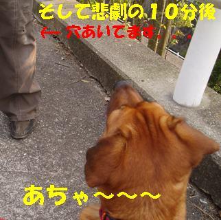 20060606223150.jpg