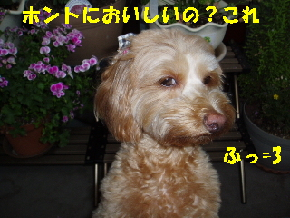 20060625185216.jpg