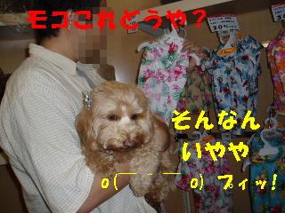 20060702222120.jpg