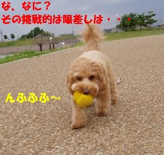 20060705205103.jpg